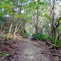 Photos: 西高森山の登山道:枯れ木の多い地点