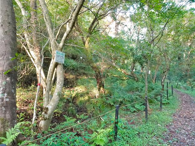 春日井市少年自然の家「野外教育センター」 - 95:散策路沿いのシデコブシ自生地