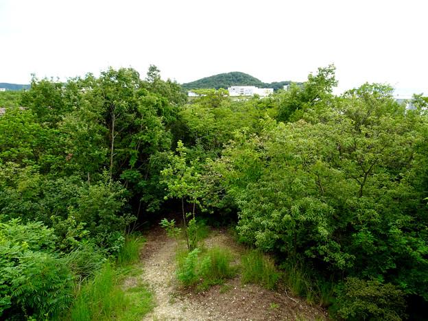 春日井市少年自然の家「野外教育センター」展望台から見た景色 - 15:高森山