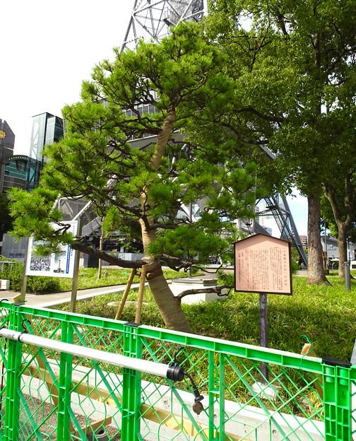リニューアルした久屋大通公園「ヒサヤオオドオリパーク」 - 34:小袖懸の松