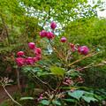 弥勒山に生えてたピンク色の花 - 1