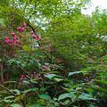 弥勒山に生えてたピンク色の花 - 2