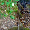 Photos: 弥勒山山頂へと通じる「23」の分岐点にある水場に「この水飲むな」の注意書き - 1