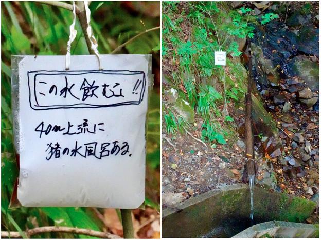 弥勒山山頂へと通じる「23」の分岐点にある水場に「この水飲むな」の注意書き - 3