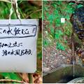 Photos: 弥勒山山頂へと通じる「23」の分岐点にある水場に「この水飲むな」の注意書き - 3