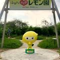 東谷山フルーツパーク:レモン園前にいた「レモンじゃ」 - 1