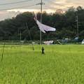 猛禽類の鳥を模したスズメ等の野鳥避け(春日井市廻間町) - 2