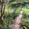 西高森山の麓にある湿地帯 - 1