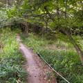西高森山の麓にある湿地帯 - 4:パノラマ