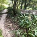 西高森山の麓にある湿地帯 - 3