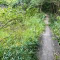西高森山の麓にある湿地帯 - 2