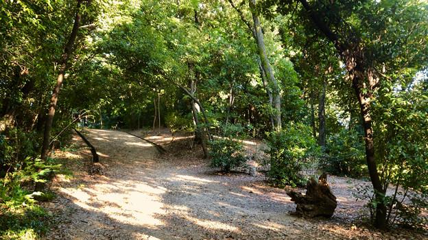 小幡緑地 西園 No - 11:森の中の遊歩道