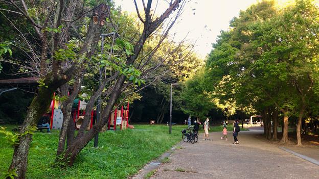 小幡緑地 西園 No - 12