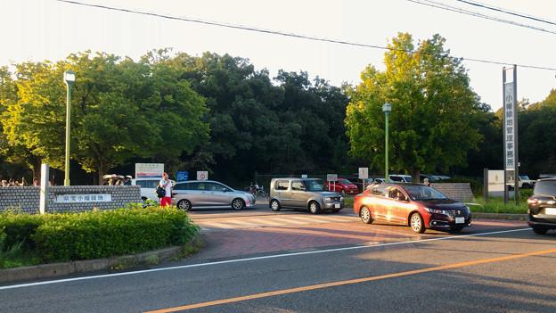 小幡緑地 西園 No - 15:駐車場出入り口