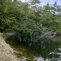 Photos: 大谷北池に沈んでいる木 - 1