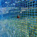 Photos: 青いネットの上にとまるテントウムシ - 1
