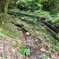 Photos: 春日井東部の山の中を流れる小木道(うぎみち)川 - 2