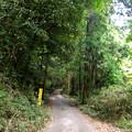 Photos: 東海自然歩道 春日井コースと交差する道路