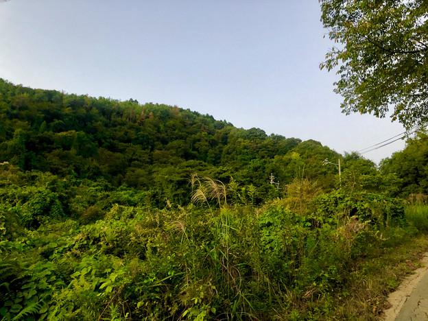 南側から見上げた道樹山 - 1