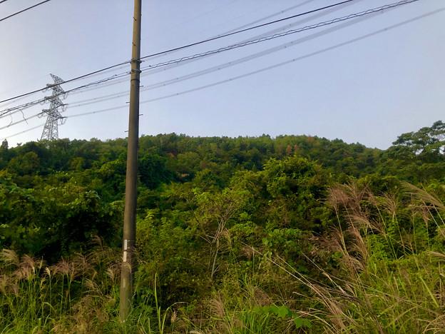 南側から見上げた道樹山 - 2