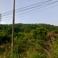 Photos: 南側から見上げた道樹山 - 2