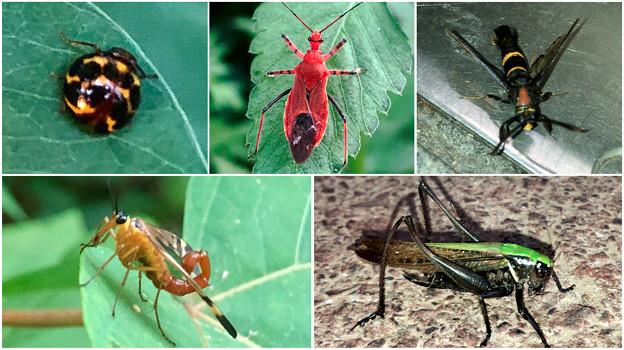 近所で見かけた奇妙な昆虫 - 1