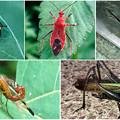 Photos: 近所で見かけた奇妙な昆虫 - 1