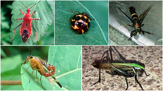 近所で見かけた奇妙な昆虫 - 3