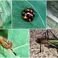 Photos: 近所で見かけた奇妙な昆虫 - 3