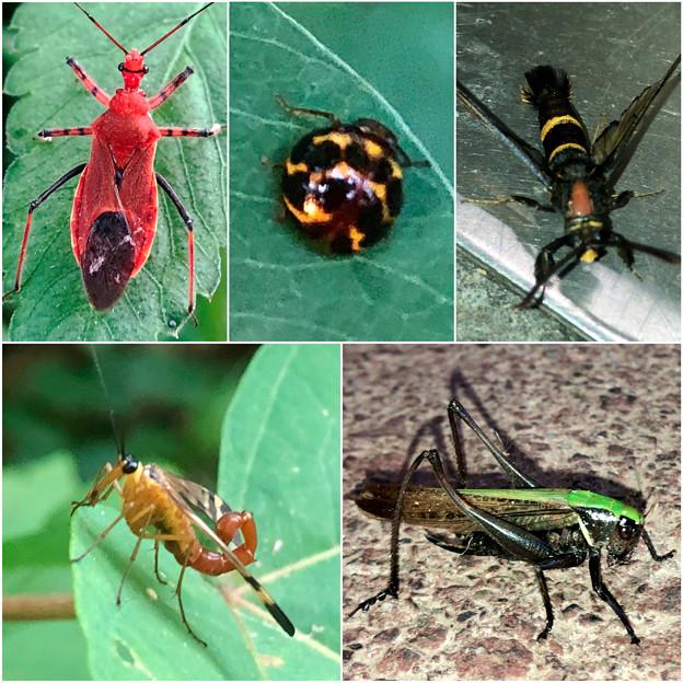 近所で見かけた奇妙な昆虫 - 4
