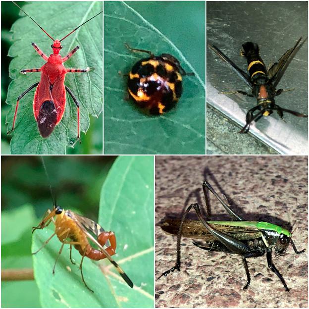 近所で見かけた奇妙な昆虫 - 2