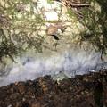 Photos: 水が流れ綺麗になってる所を夜照らしたら分かりやすかった弥勒山の大理石 - 6