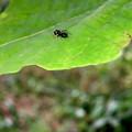 Photos: アリとほとんど区別がつかないアリグモのメス - 2