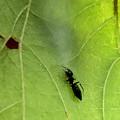 Photos: 巣に入るアリグモのメス - 2