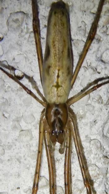 Photos: 細長い蜘蛛 - 6