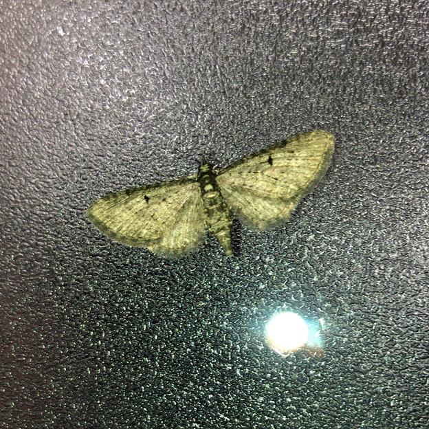 コンビニのすりガラスの上にいた羽を広げた小さな蛾