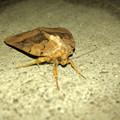 ちょっと変わった模様の蛾 - 3
