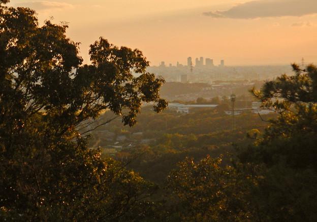 西高森山の眺めが良い場所から見た名駅ビル群