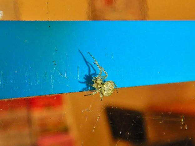 コンビニの壁にいた小さな蜘蛛 - 1