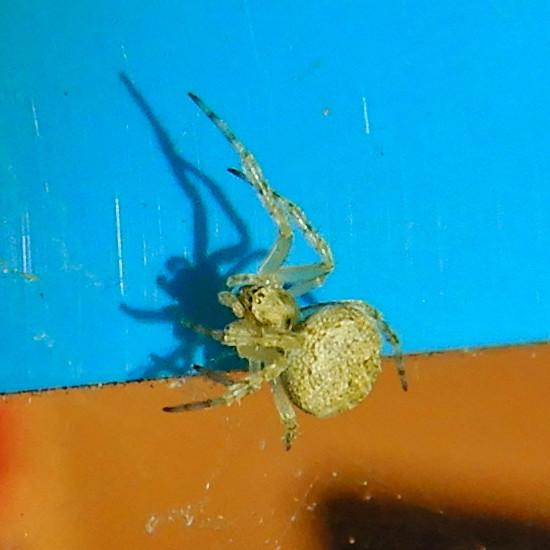 コンビニの壁にいた小さな蜘蛛 - 2