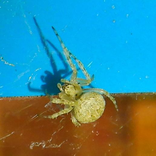 コンビニの壁にいた小さな蜘蛛 - 3