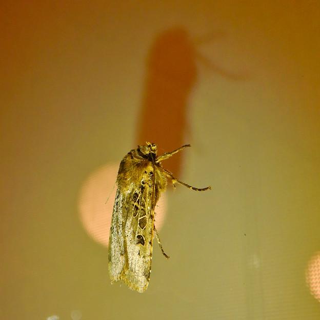 蛾と影 - 1