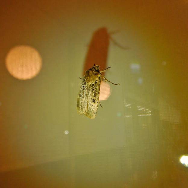 蛾と影 - 2