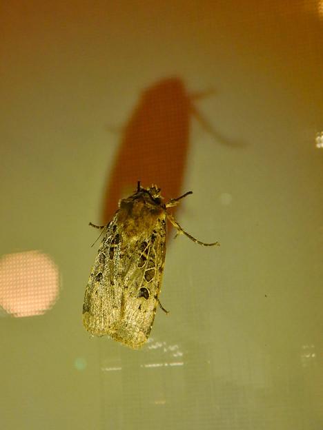 蛾と影 - 3