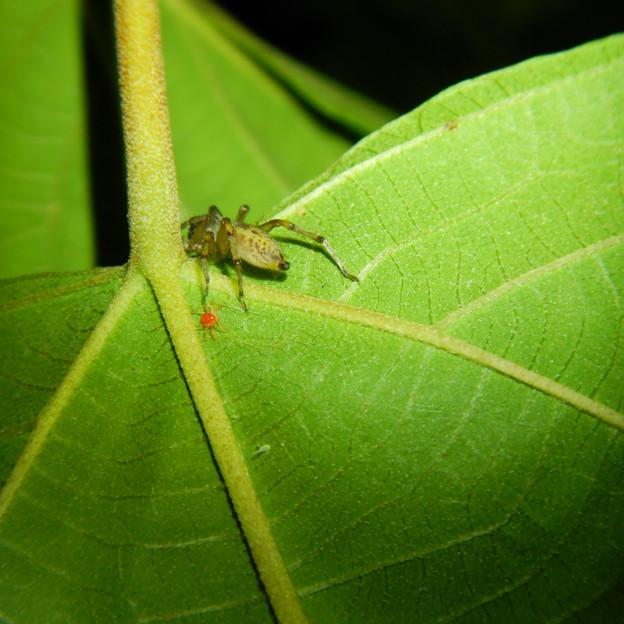 タカラダニと蜘蛛 - 4