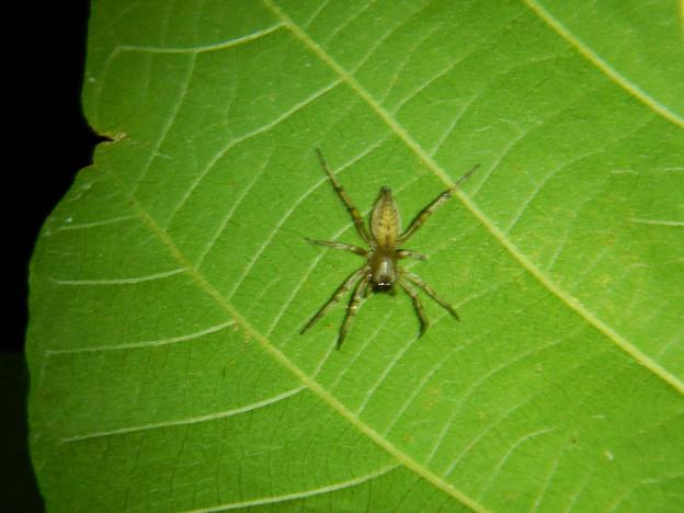 葉の裏にいた小さな蜘蛛 - 1