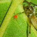Photos: タカラダニと蜘蛛 - 3