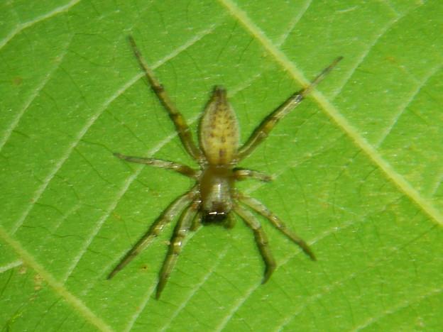 葉の裏にいた小さな蜘蛛 - 2