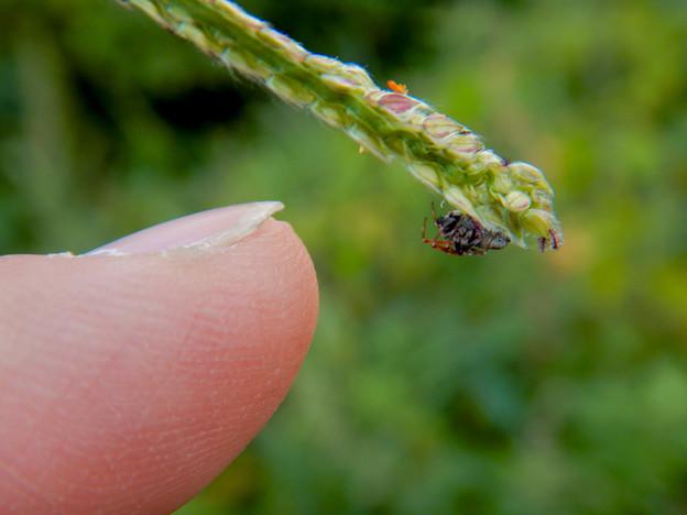 草の上にいた爪先サイズの小さな蜘蛛