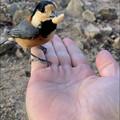 Photos: 弥勒山山頂でヤマガラに手の上のピーナッツやりに成功! - 5